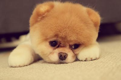 http://galazioneiro.blogspot.gr/  , Πως να ηρεμήσετε έναν νευρικό σκύλο.
