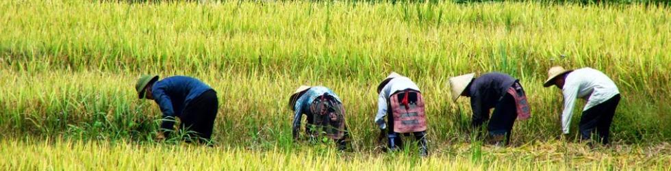 Vietnam: el Dragón de Indochina