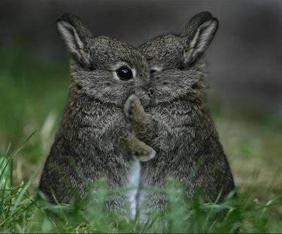 kaninunger til salg