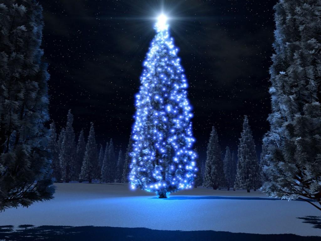 el abeto rojo rbol de navidad smbolo de la belleza y la perfeccin
