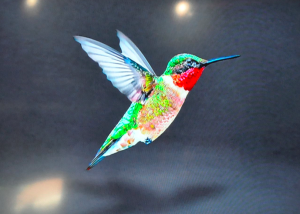 Google Hummingbird Takes Flight: Biggest Change to Search Since Caffeine