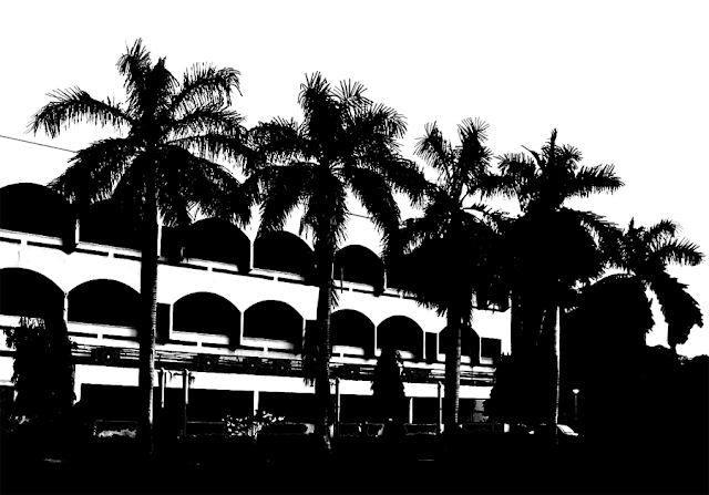 silhouette of a row of coconut palms against the backdrop of a building