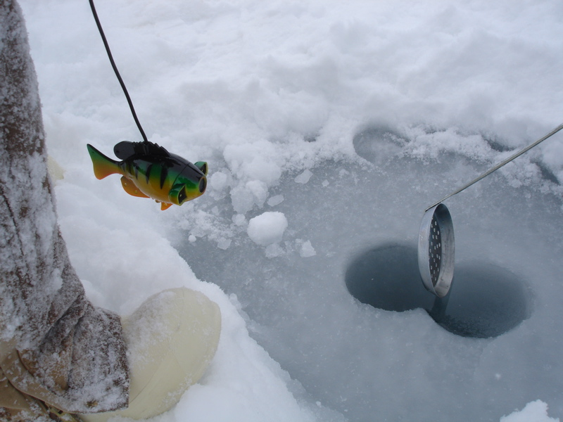 Arctic sea ice adventures snippets of life on the ice for Underwater ice fishing camera