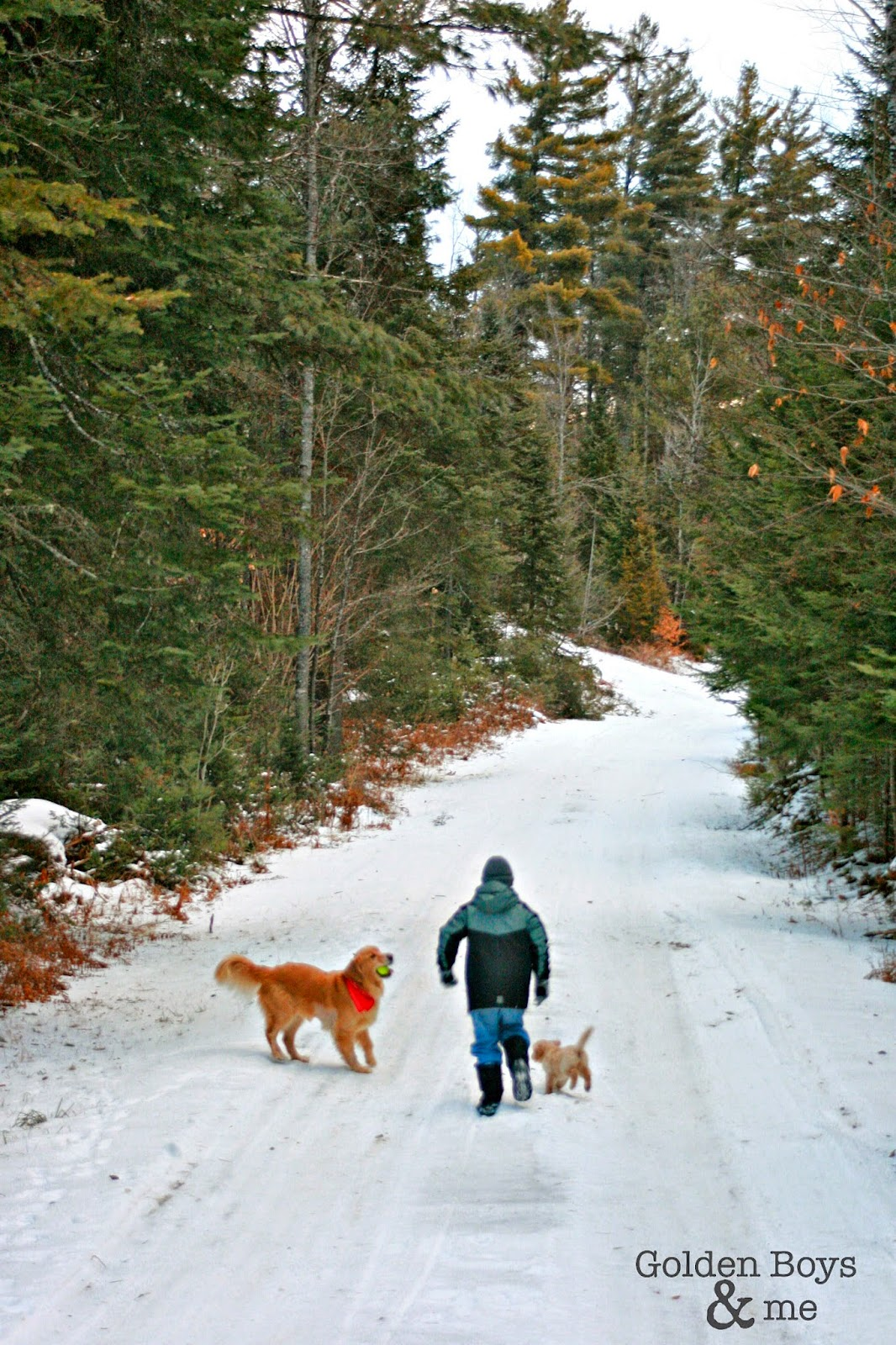 Boy and Golden Retrievers in snowy woods-www.goldenboysandme.com