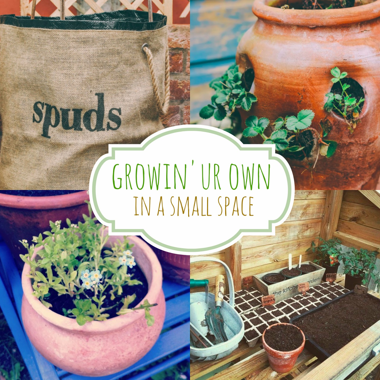 Growing your own, in a small space