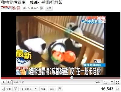 貓熊打群架