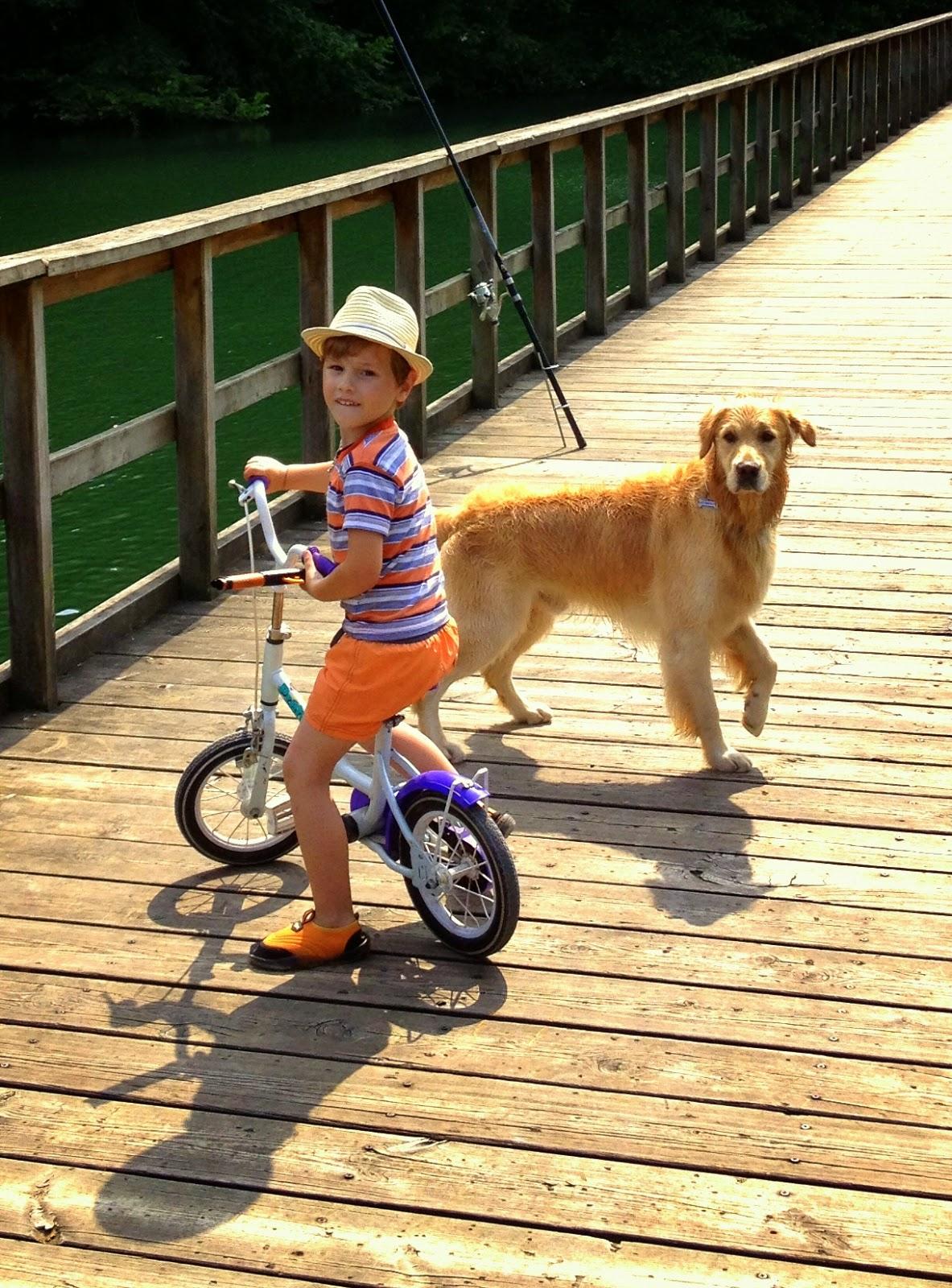 Asturias con niños a dónde vamos hoy? al I Encuentro Mierensepor los animales adoptados