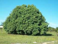 AME A NATUREZA! PLANTE ÁRVORES