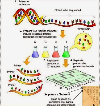next generation dna sequencing informatics pdf