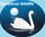 Terrestrial Wildlife