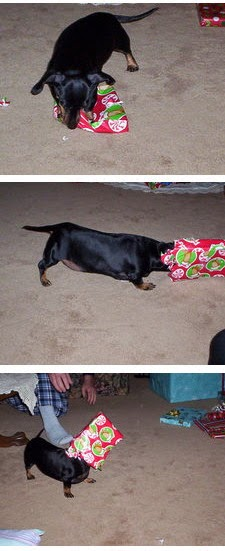 Millie Loved to Open Christmas Gifts