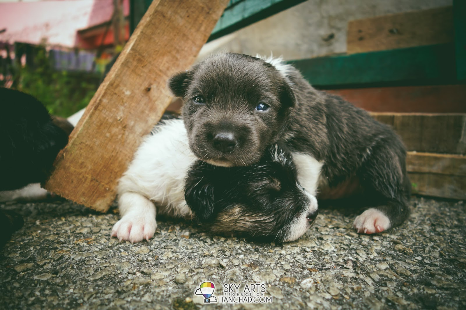 cute puppies sleeping crawling looking for mom's milk