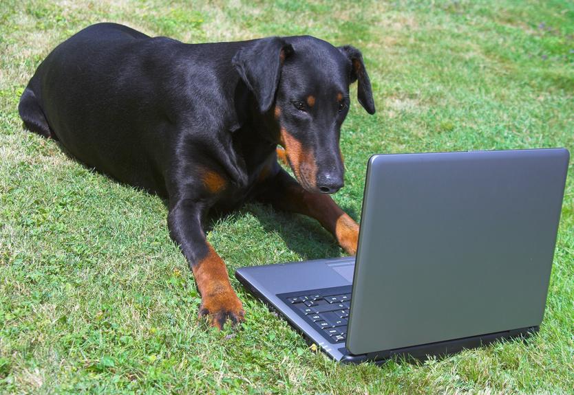 protege tu blog del spam