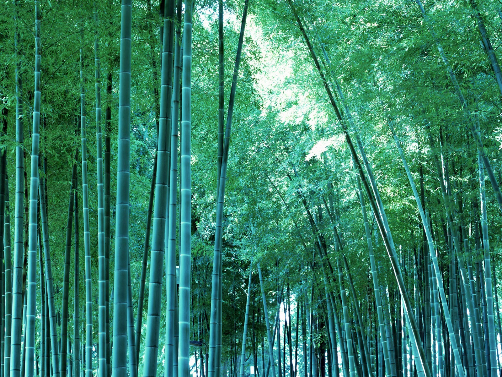 http://4.bp.blogspot.com/-A-WW5SBok4I/TqKadi4sAMI/AAAAAAAABIA/e057UEHy2Jk/s1600/bamboo_print_wallpaper.jpg