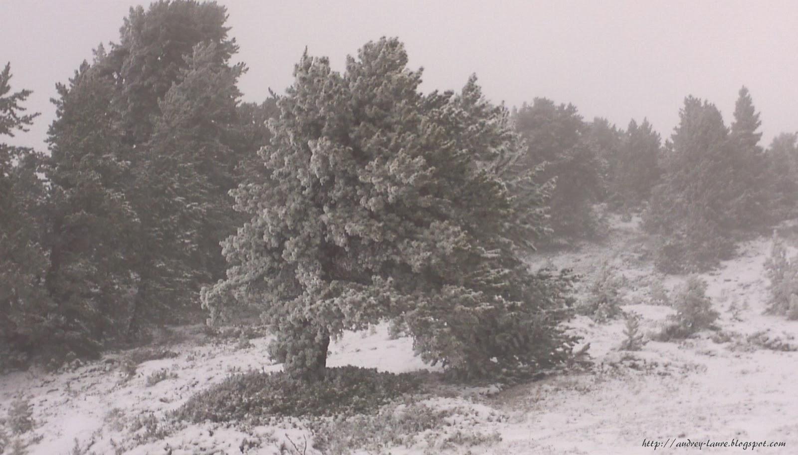 pont dans l'arbre sous la neige