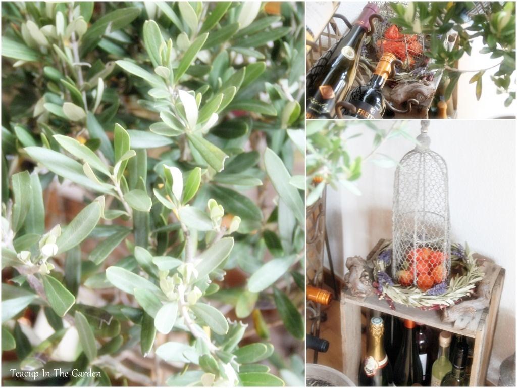 wein oliven teacup in the garden. Black Bedroom Furniture Sets. Home Design Ideas