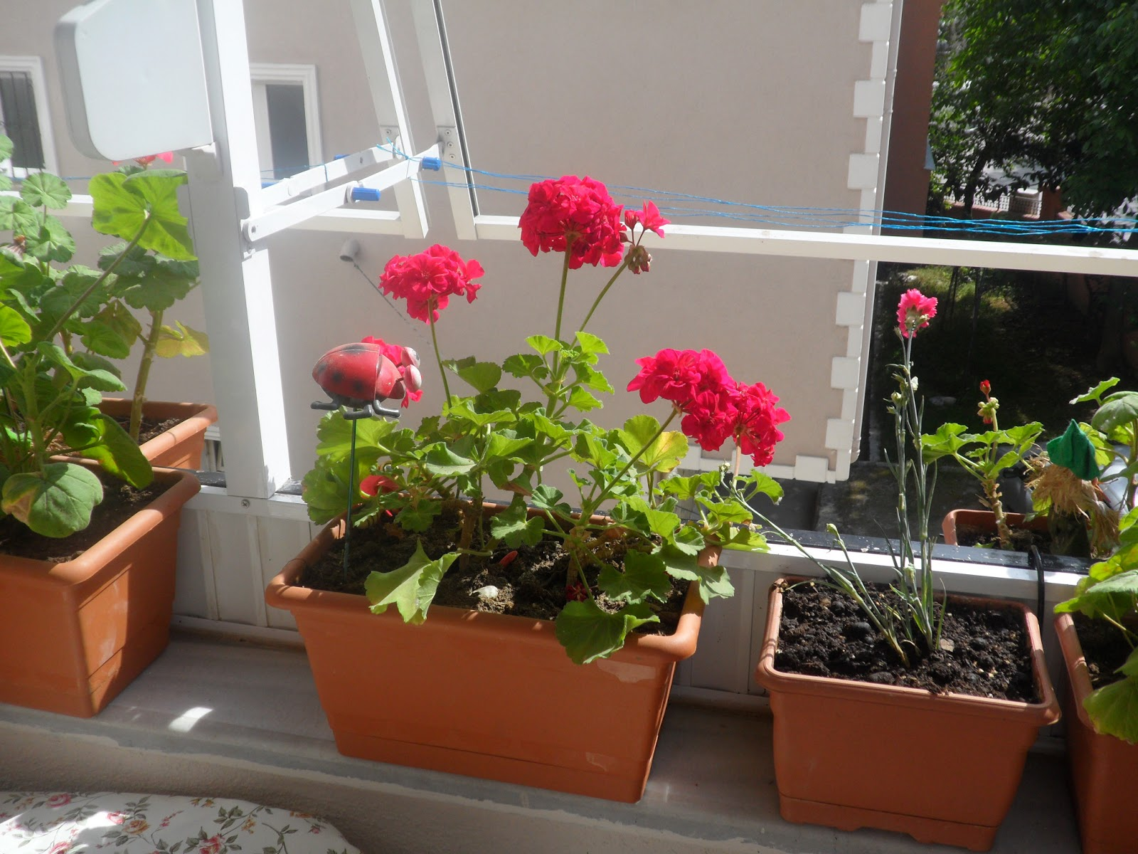 Apartment Balcony Flowers: Wonderful balcony garden ideas to bring ...