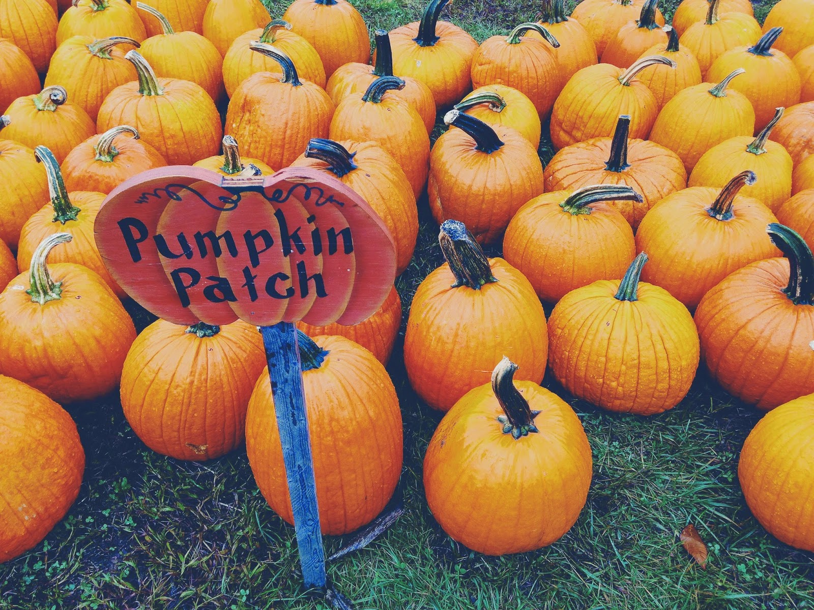pumpkin patch personal trip Mom shares horrifying photo of legs after trip to pumpkin patch share alex lasker, aolcom  kikkik medium leather personal planner buy it.