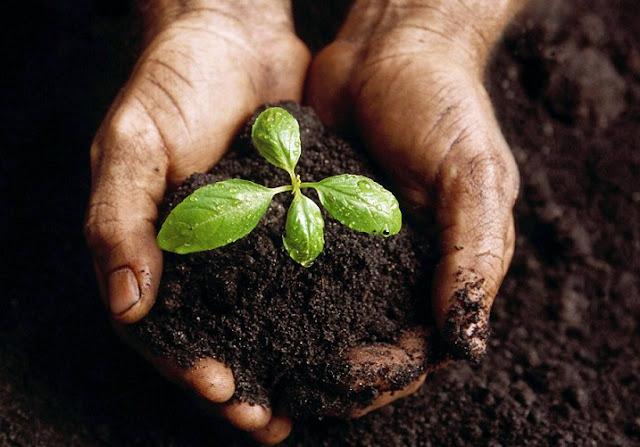 Asosiasi Bank Benih Hadir Untuk Petani