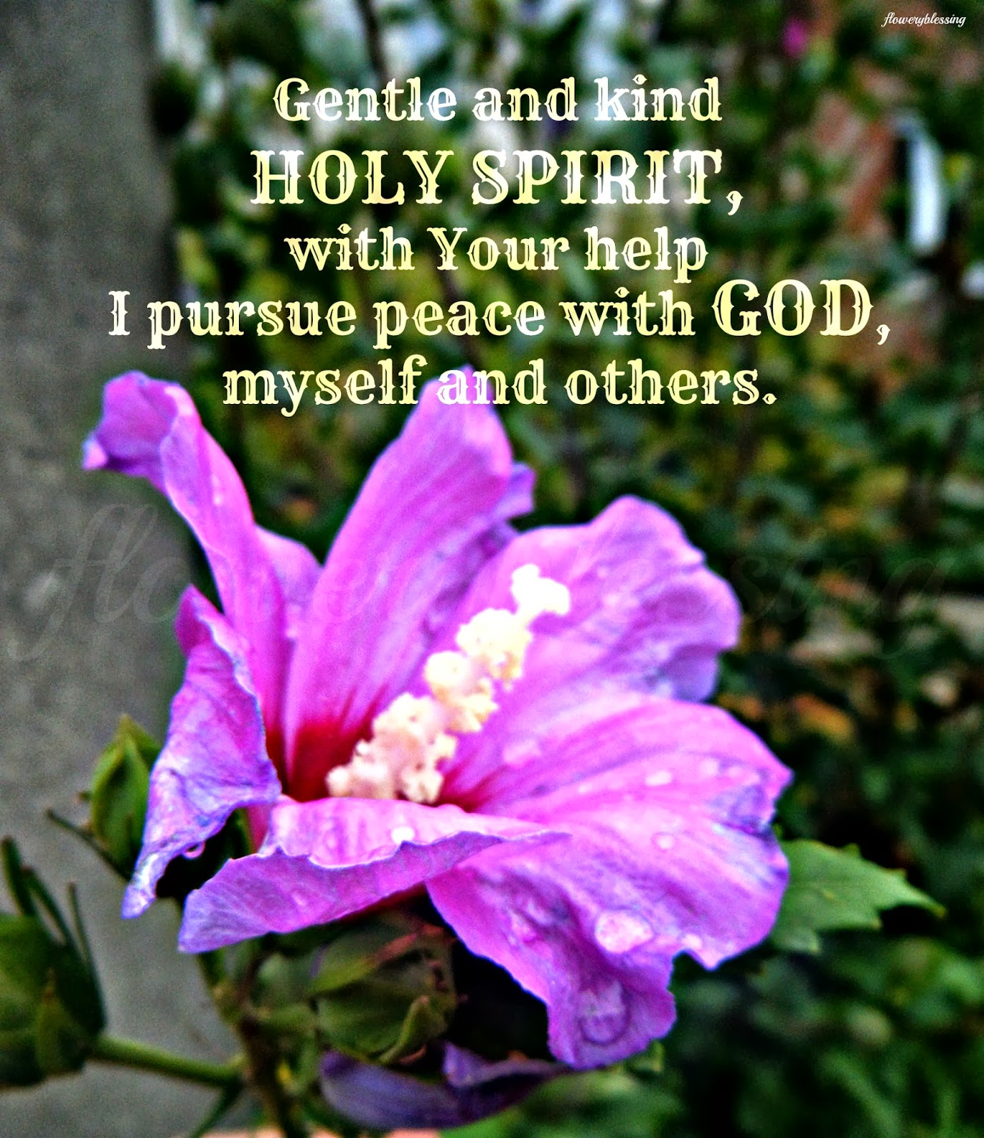 Flowery Blessing Gentle and kind HOLY SPIRIT with Your help I pursue peace
