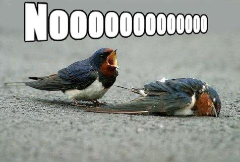 [Image: noooo_birds.jpg]