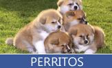 Colección especial de fotos de perros, cachorros y perritos - Dogs and Puppies