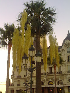 Palm tree across the Monte Carlo Casino