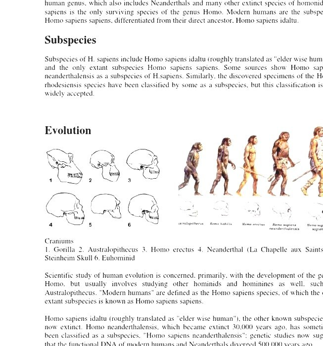 What is the complete classification of modern humans