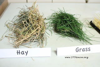 "Hay an Grass scat ""mix-ins"" for Cold Scat Creamery Lab: STEMmom.org"