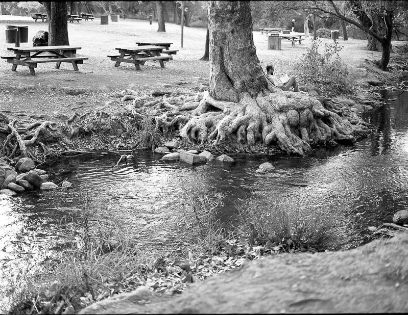 Anderson Lake County Park Mamiya 645af tmax 400
