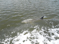 Dolphins abound in souther waters. Rarely do they follow close to the boat. These guys (four?)