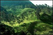 Bosques de la región andina (bosques de la regiã³n andina)
