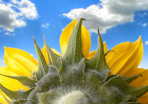 Hình ảnh hoa đẹp nhất năm 2013, các loài hoa đẹp nhất