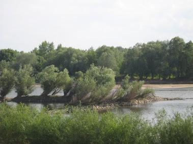 Wisła w okolicach Puław