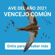 Ave del Año 2021