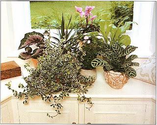 Мелким растениям так же полезен рост в группе, как и крупным