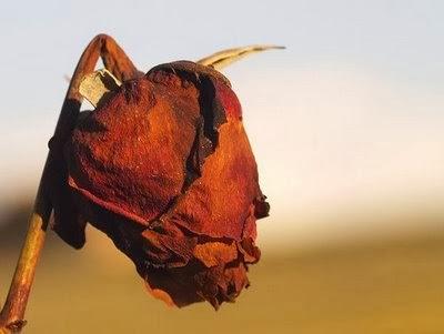 06/05 - Por que morre a planta do amor?
