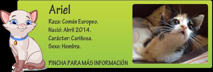 http://mirada-animal-toledo.blogspot.com.es/2014/06/ariel-hermosa-cachorra-en-adopcion.html