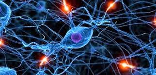 تجدد الخلايا العصبية في أدمغة البالغين وطرق المحافظة على النورونات الوليدة
