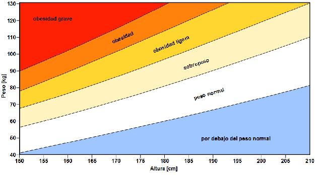 Altura y peso adultos promedio