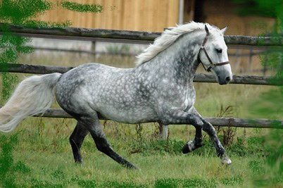 image cheval gris