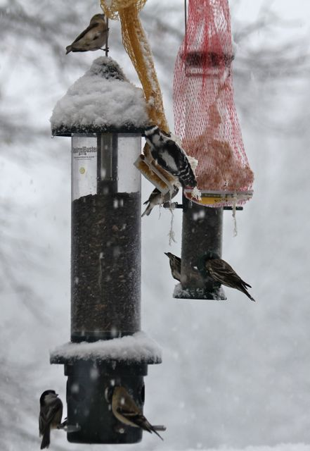 birds flocking to the feeders