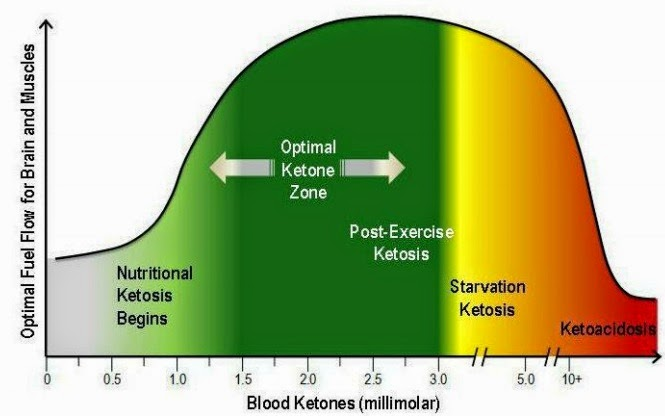 Benefits of Ketogenic Nutrition