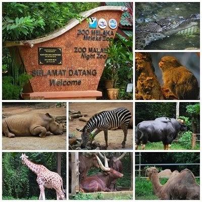 حديقة حيوانات ملاكا