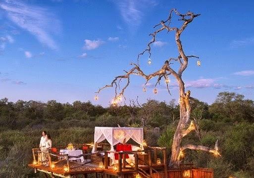 Hotel Rumah Pohon