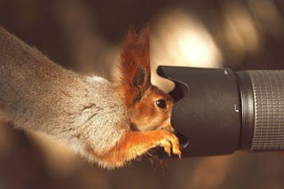 Funny Beautiful Animals