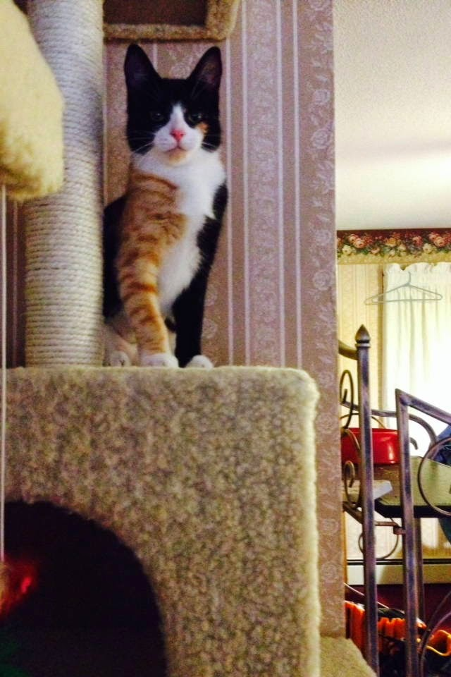 Funny cats - part 100 (40 pics + 10 gifs), funny cat pictures, kitten pics