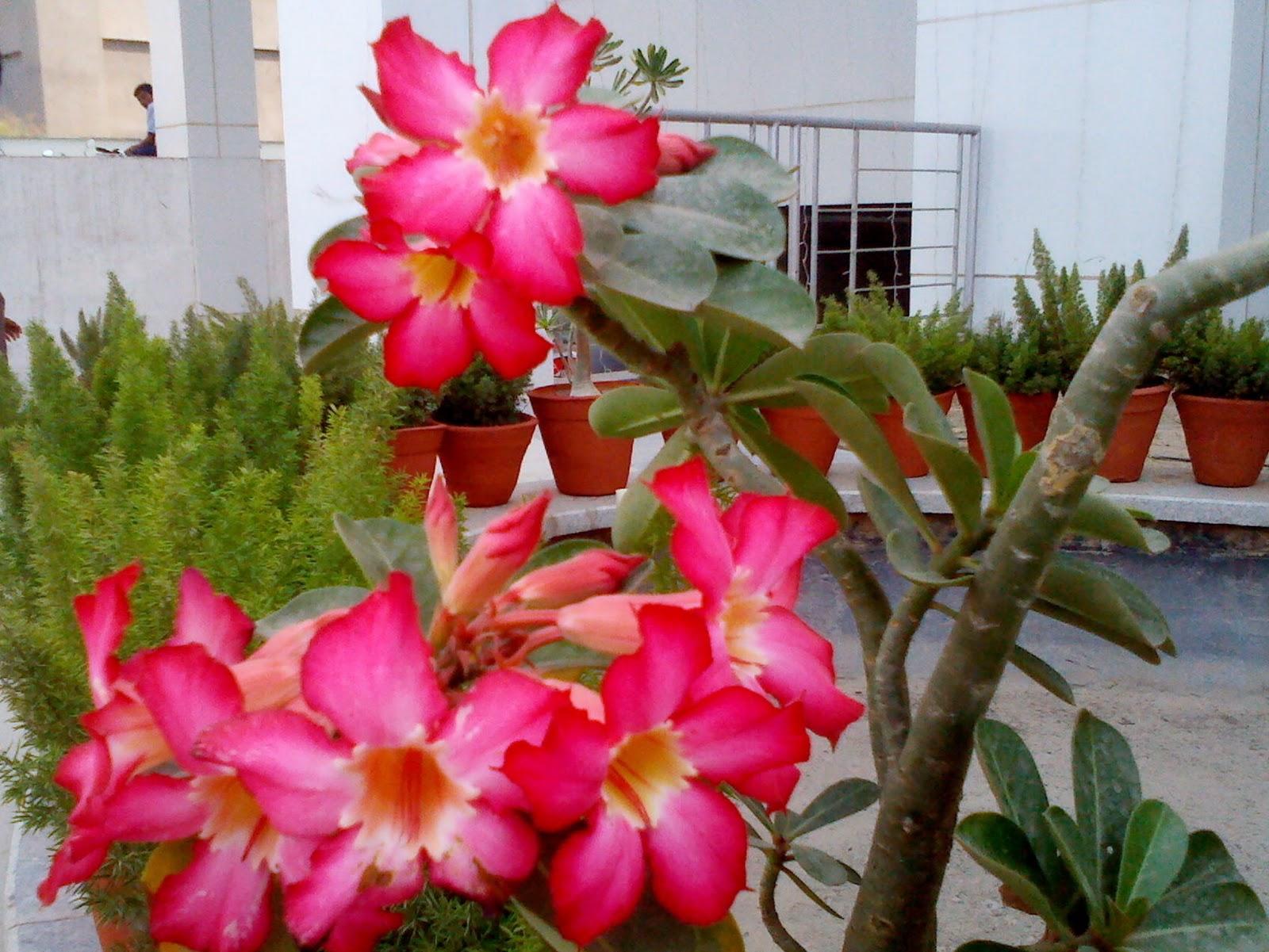 http://4.bp.blogspot.com/-A5HTMifi8ho/Tqj71BXOK7I/AAAAAAAABWU/jPGvNQmBvDg/s1600/Close+shot1.jpg