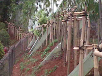 penyangga bambu tanaman glodogan tiang 3 meter