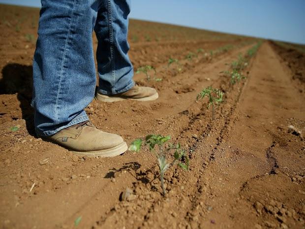 Farmer views precision farming (Photo Credit: Justin Sullivan/Getty Images) Click to Enlarge.
